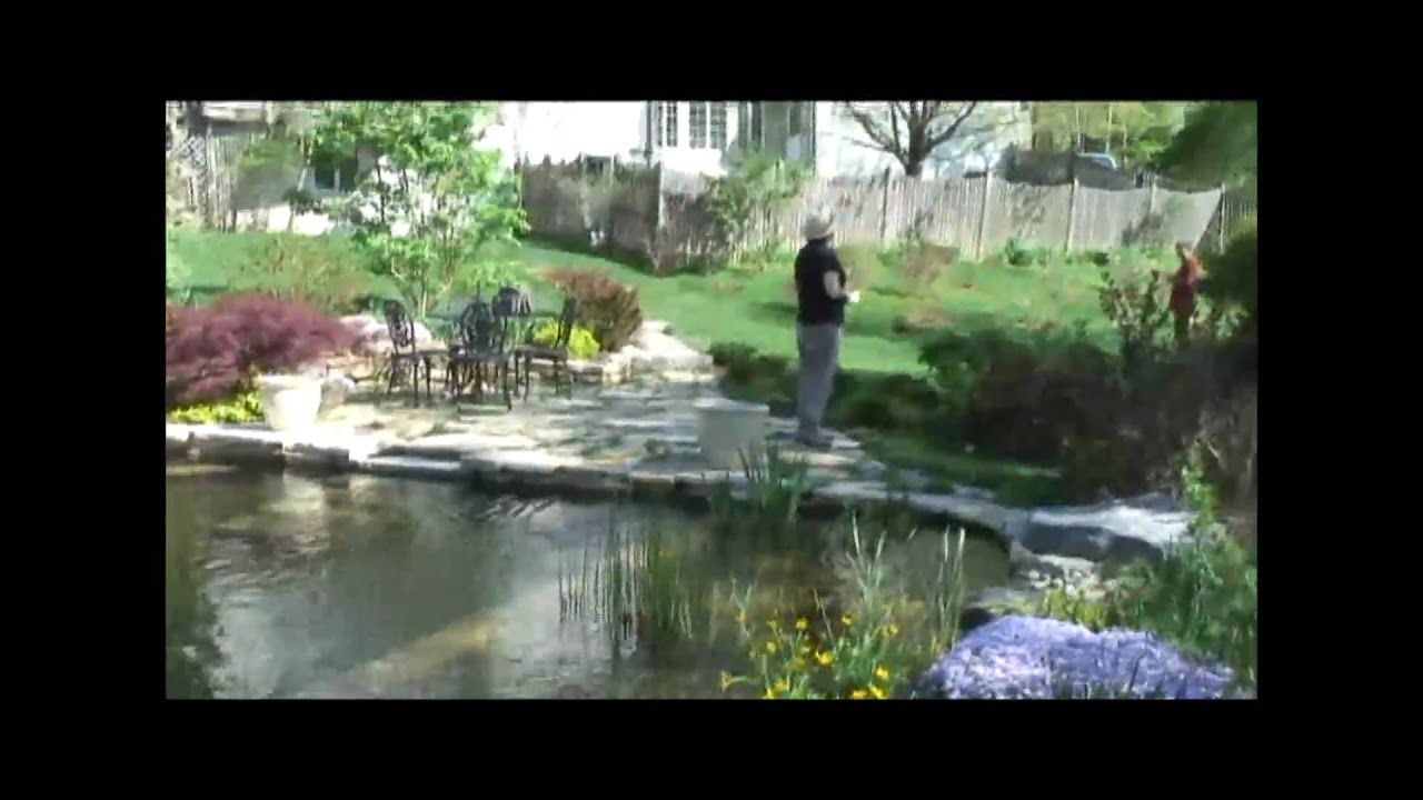 Tom And Avery Natural Swimming Pool Or Garden Swim Pond Youtube