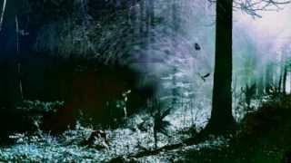 Folkstorm - Elfenliederen