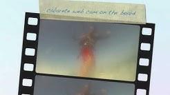 cabarete web cam live on the board