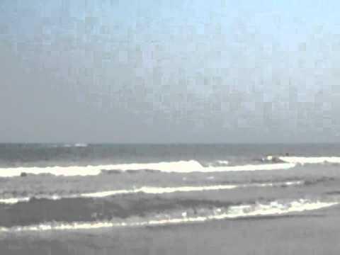 OCEAN DOLPHIN WHALES
