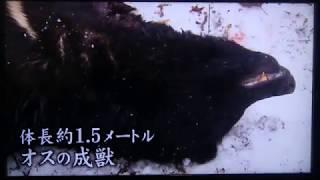 玉川マタギ「変わる山の変わらぬもの」最終話 FNSドキュメンタリー大賞 ...