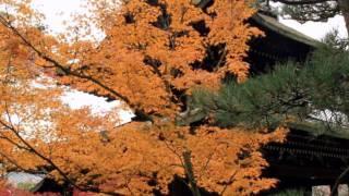 田辺市に位置する一休寺紅葉の季節に散策してきました。 紅葉も見頃境内...