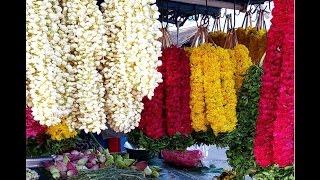 видео Цветы Индии