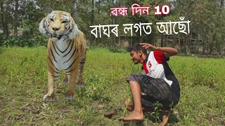 day 10 - বাঘৰ লগত আছোঁ -  with a 3D tiger