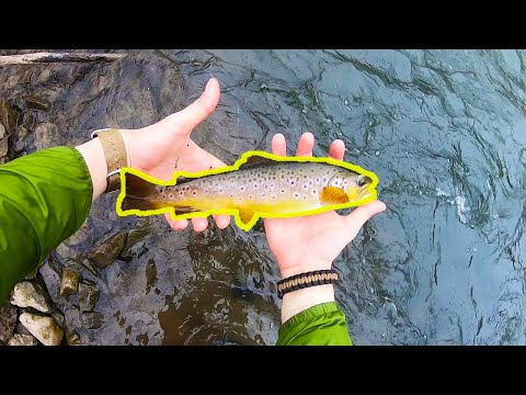 Spring Creek (Bellefonte) Wild Brown Trout + New Spinners