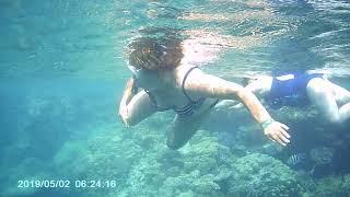Риф отеля Coral Beach Resort Montazah Шарм эль Шейх Египет сентябрь 2020 года