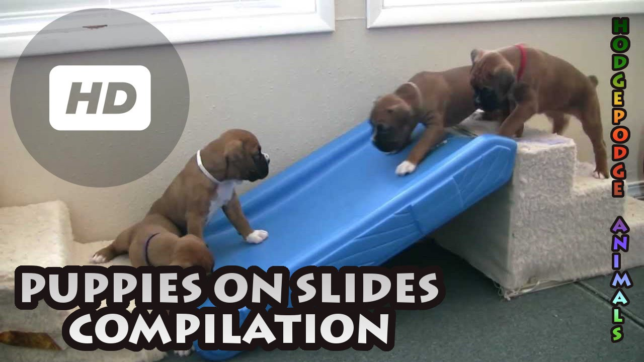 Puppies On Slides Compilation Youtube