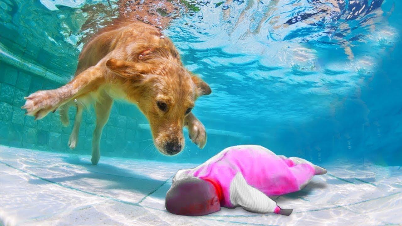 الكلب البطل ينقذ طفل من الغرق بطريقة لا تصدق !!