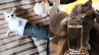 Funny Cat Fails Videos 2020 🙀 Cats Doing Stupid Things 😂