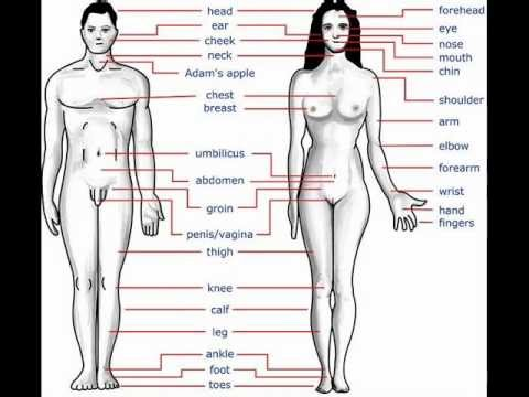 human body facts n other facts - youtube, Muscles