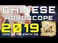 Monkey 2019 Chinese Horoscope - Chinese Zodiac 2019