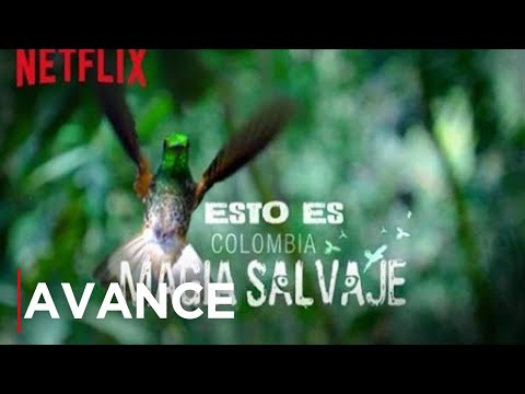 Colombia: Wild Magic | Best Nature Documentaries on Netflix