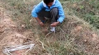 How to Find quail - Cambodian - khmer Catching Birds - Amazing Video