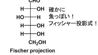 フィッシャー投影式から単糖の構造式作り出す!