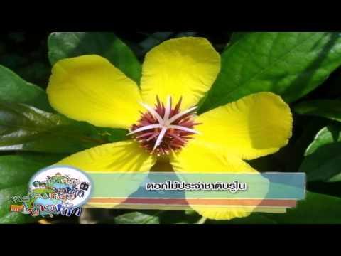 ครอบครัวข่าวเด็ก ช่วง Asean Weekly ตอน ดอกไม้ประจำชาติบรูไน (21 ส.ค.57)