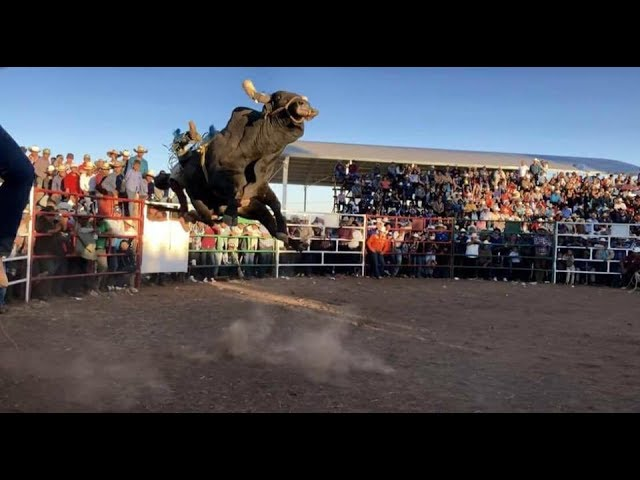 vaya-torazo-el-dolar-de-rancho-el-aguaje-2017-bueno-para-comprar-toros