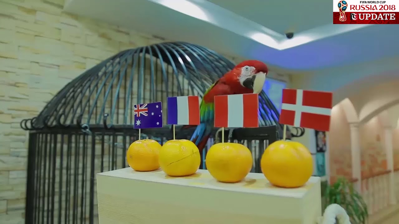 Psychic parrot predicts World Cup 2018 winner