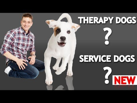 What's The Difference Between a Service Dog