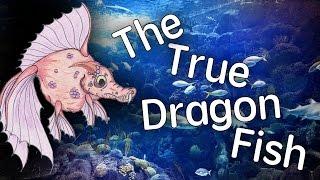 The True Dragon Fish