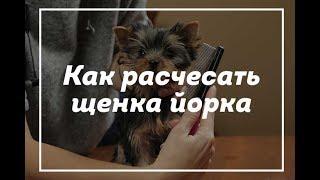Как расчесать щенка йорка / подарок ребенку / щенок йорка