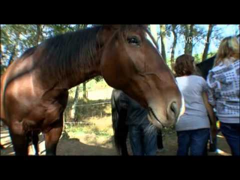 VÁCLAV VYDRA - koně na ranči