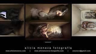 series fotográficas :: alicia-moneva 2016