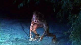 Чупакабру засняли на видео(В объектив видеокамеры мобильного телефона попало существо, похожее по описанию на знаменитого вампира..., 2013-07-03T16:08:01.000Z)