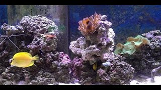 MacDaddy's Saltwater Aquarium Critters