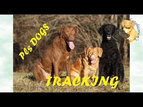 Tracking: CBR, CCR, NSDTR, GB mix