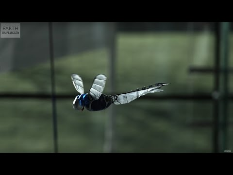 Incredible Flying Robot Dragonfly  - Slo Mo - Earth Unplugged