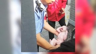 Newborn baby girl rescued from China toilet