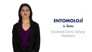 ENTOMOLOJİ - Ünite 5 Özet