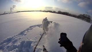 Алабай, ты лучший в Мире !!! Игры со снежком...Sony action cam