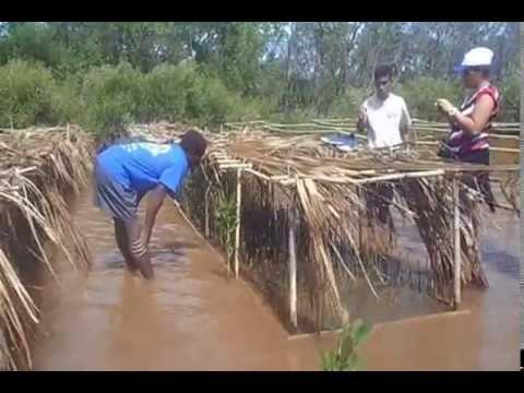 Visit of mangrove restoration  (Andranomavo)