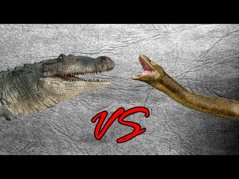 Deinosuchus vs Titanoboa