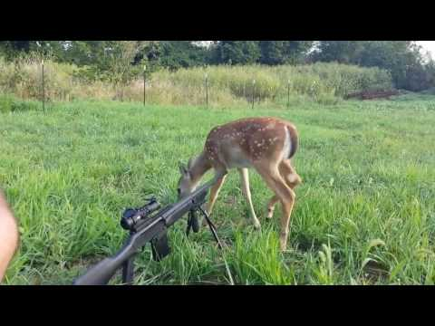 Simplest Hunting/Gun Fails Compilation From The Fail Blog thumbnail