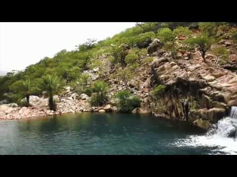 Остров Сокотра - Эндемичная флора / Socotra - Endemic flora