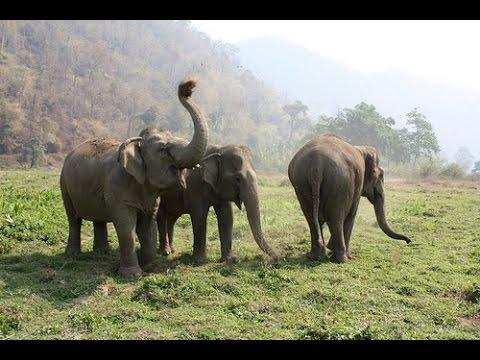 Африканский и индийский слон фото