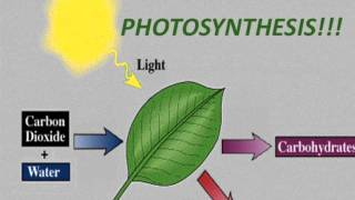 Photosynthesis Rap (50 Cent - In Da Club)