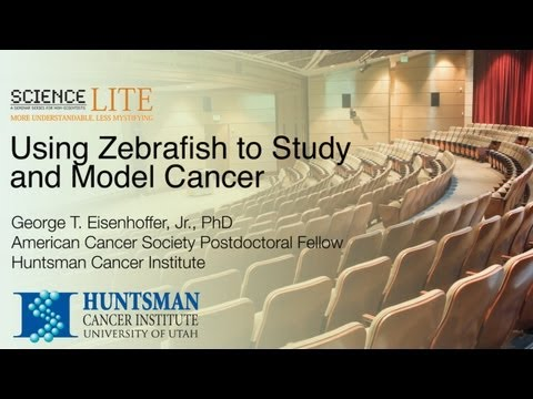 Science Lite -- Using Zebrafish To Study And Model Cancer