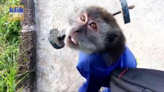 Waaah ... Monyet Ini Bersujud Setelah Diberi Uang!