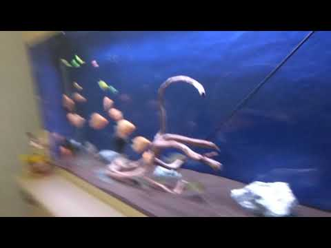 трубки,  шланги за аквариумом