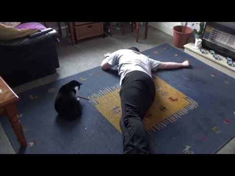 Playing Dead in Front of My Cat