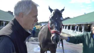 Trainer Dale Romans Shows Ray Paulick How To Give A Horse A Bath