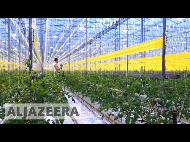 Dutch scientists close to 'breakthrough' method of growing crops in deserts.