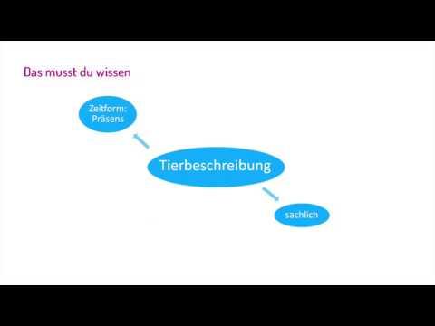 deutsch eine tierbeschreibung schreiben zum lernvideo - Muster Tierbeschreibung