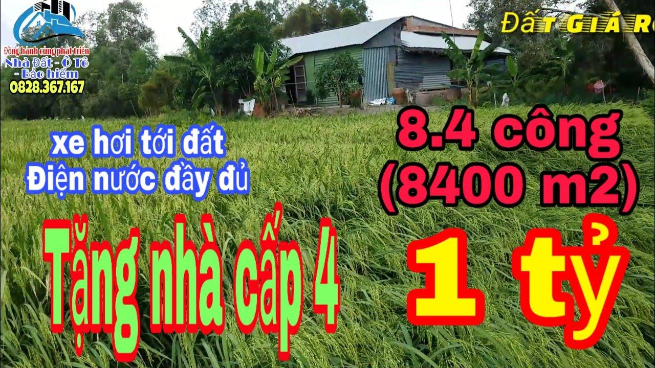 🔴 Đất giá rẻ   Bán Đất Ruộng, 8.4 Công, huyện Tân thạnh, Long an ( Đã bán)