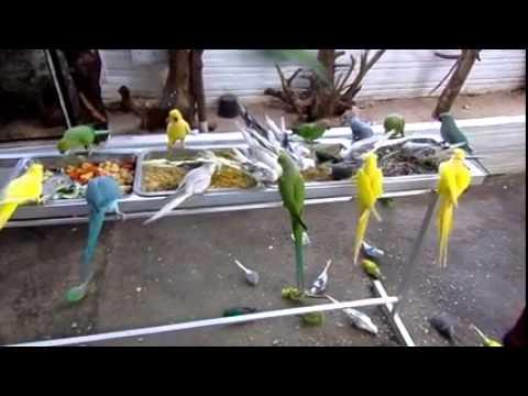 احلى تجمع للطيور ( طيور الزينة )