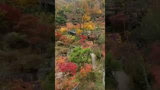 화담숲 단풍경치편4 모노레일에서조경