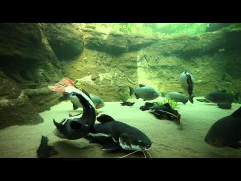 The Blue Planet Aquarium - Copenhagen March 2013   (HD 1080p)